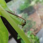 image of insect
