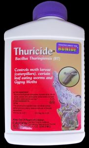 Thuricide is one of several brands of Bt used for caterpillar control.