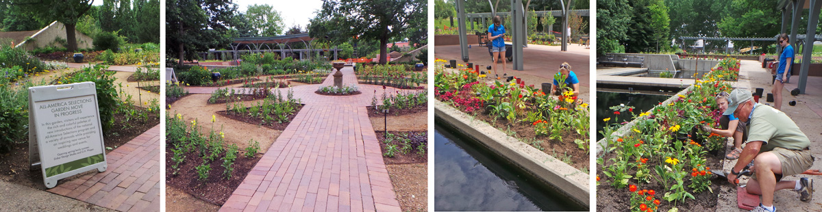 The renovated All-America Selections garden (L and LC) was being planted by volunteers (RC and R).