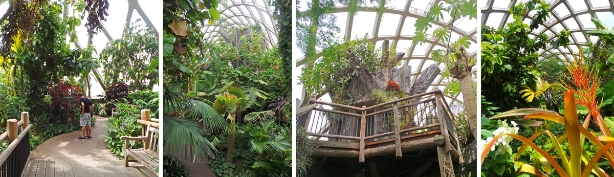 Inside the Tropical Conservatory paths (L) lead past all kinds of lush foliage (LC and R), with a two-story model of a banyan tree for views within and above the canopy (RC).
