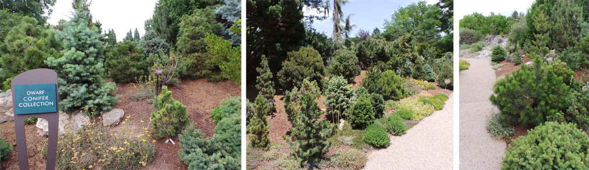 The Dwarf Conifer collection includes many different slow-growing species and cultivars suitable to the region.