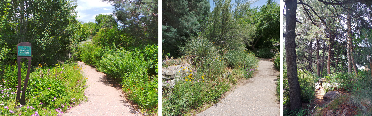 The Gates Montane Border (L) includes many plants common to montane areas (C), including ponderosa pine (R).