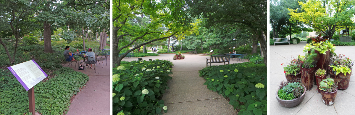 The Oak Grove is a curated collection of the genus Quercus, with space for people and some container plants.