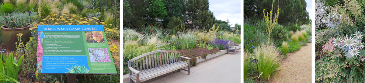 The Roads Water-Smart Garden (L and C) demonstrates ways to group plants with similar water requirements, including many grasses (RC), yuccas, and sea holly, Eryngium x zabelii 'Big Blue' (R).