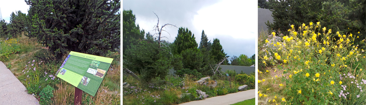 The Bristlecone Border includes the iconic gnarled pines (L and C) and native plants, such as columbine (R).