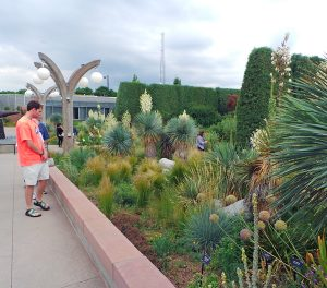 The Crossroads Garden features many yuccas and related species.