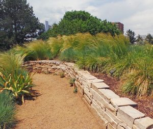 Many ornamental grasses are displayed included Mexican feather grass, Nassella tenuissima.
