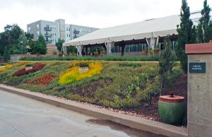 The Nexus Garden.