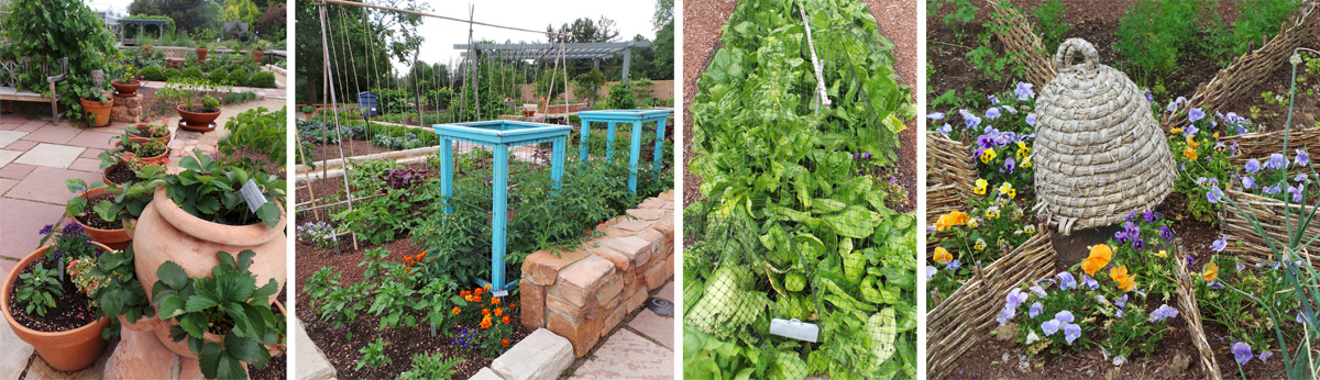 A variety of vegetables and fruits are grown in the Le Potager.