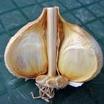Hardneck garlic has a woody stem in the center of the bulb.