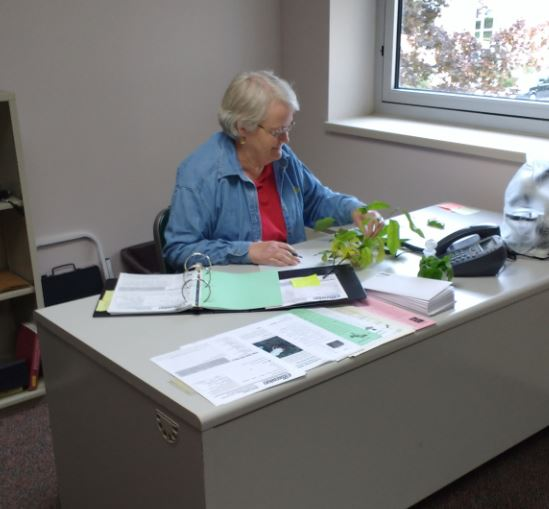 A Master Gardener Volunteer sleuthing for a solution to a plant question.