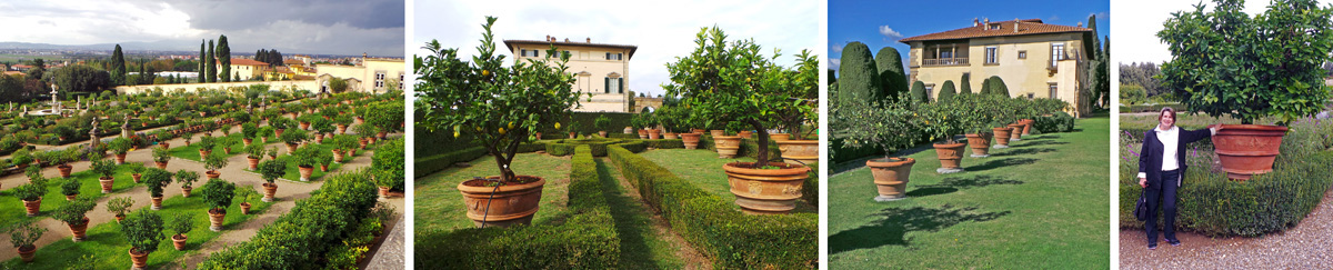 Citrus trees in terra cotta pots at Giardino di Castello (L), Villa Vico Bella (LC), Villa Gamberaia (RC), and with MGV Sue R. at Villa della Pertraia (R).