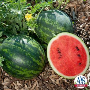 Watermelon 'Mini Love'