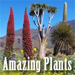Articles on Some Attention-grabbing Vegetation – Grasp Gardener Program