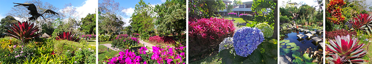Scenes in the garden at Hotel Bougainvillea.