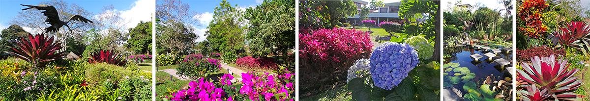 Scenes in the garden at Hotel Bougainvillea.