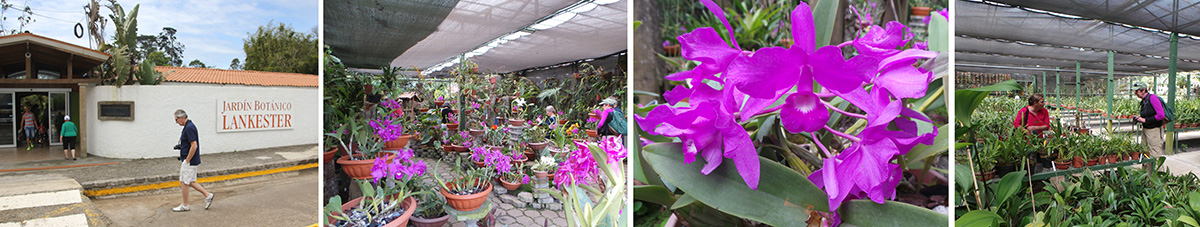 John and Sharon walking into Lankester Botanical Garden (L), the orchid showhouse (LC), blooming guaria morada (Guarianthe skinneri) (RC), and inside the miniature orchid shadehouse (R).