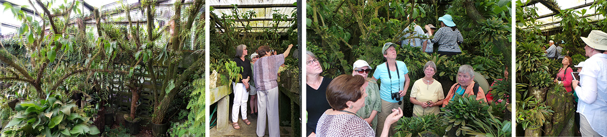 The miniature orchid house (L), Ileana tells the group about some of the plants (LC and RC), and the group looks at the miniature orchids (R).