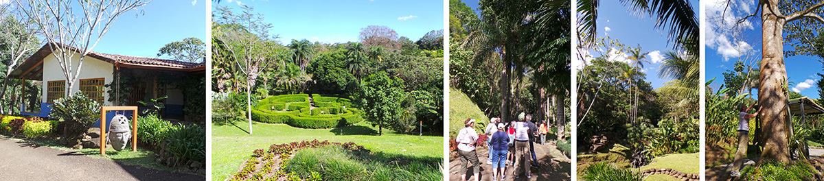 """Reception building at Else Kientzler Botanical Garden (L), looking from porch of reception (LC), the group walks under royal palms, the national """"tree"""" of Cuba (C), other palms in the gardens (RC), Mary admires the fat trunk of a kapok tree (R)."""
