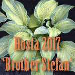 hosta17bs-title