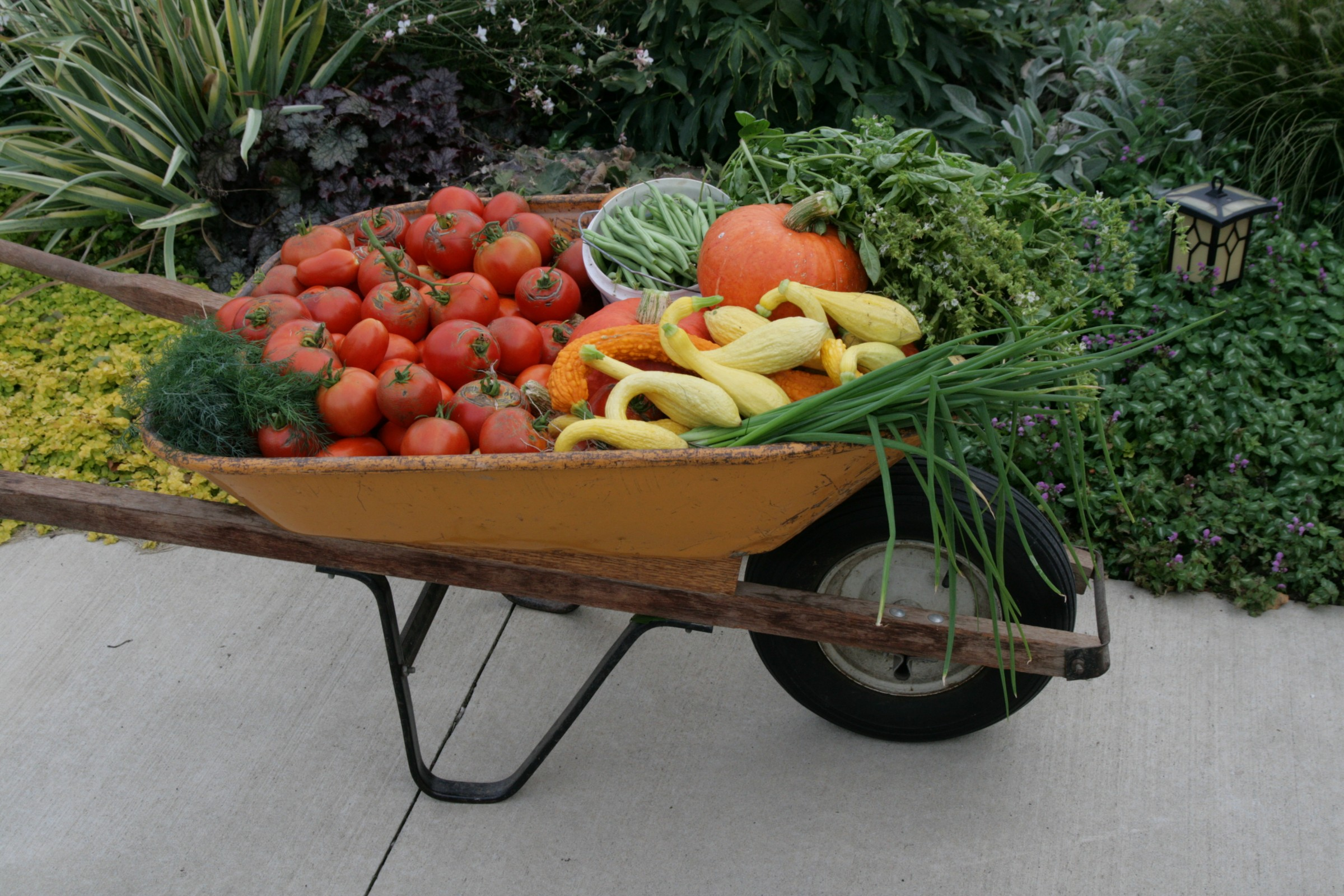 Wheelbarrow full of vegetable produce