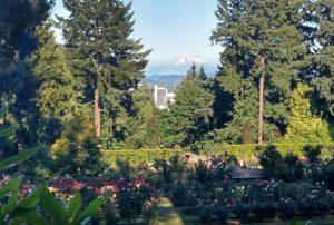 iconic gardens of portland oregon the rose garden japanese garden chinese garden - Portland Rose Garden