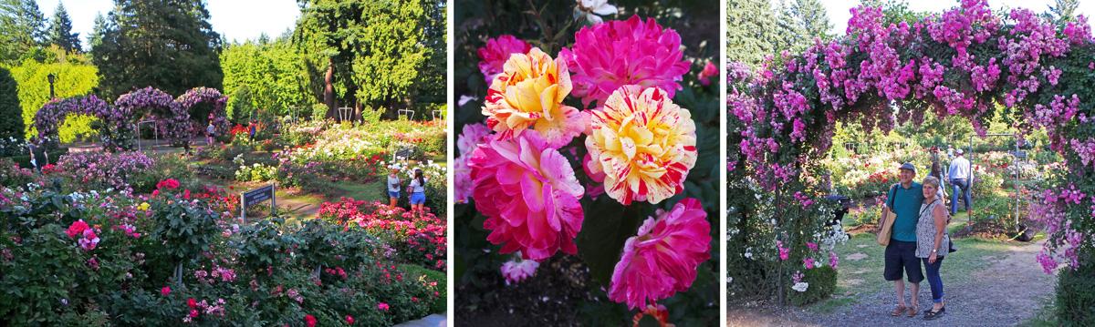 the international rose test gardens in portland oregon offer fabulous flowers throughout the summer - Portland Rose Garden