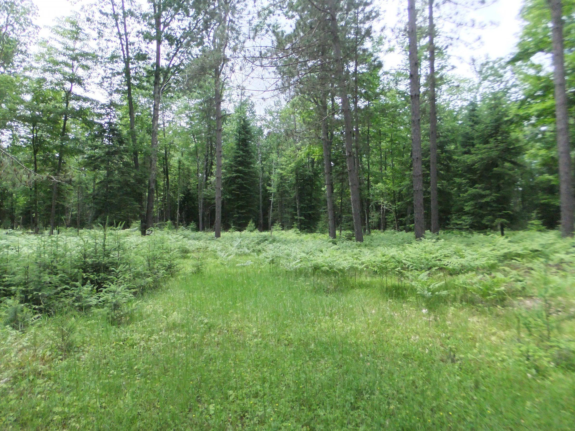 Earthworms and other species can have large effects on Wisconsin forests.