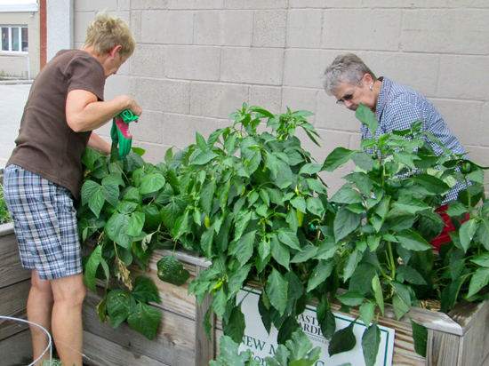 image of gardeners