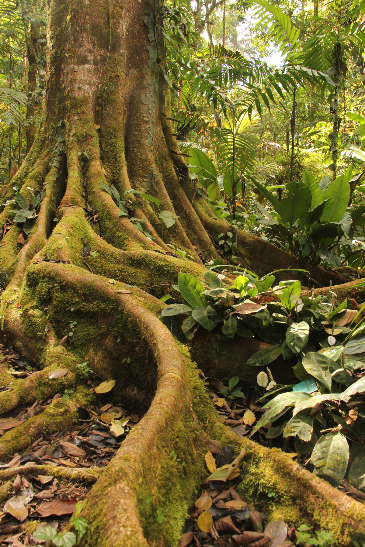 Tree roots are an often overlooked but very important aspect of tree anatomy.