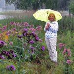 Dunn County Historical Society Rain Garden