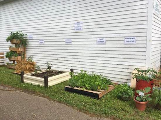 image of veggie gardens