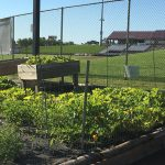 image of garden and ball field