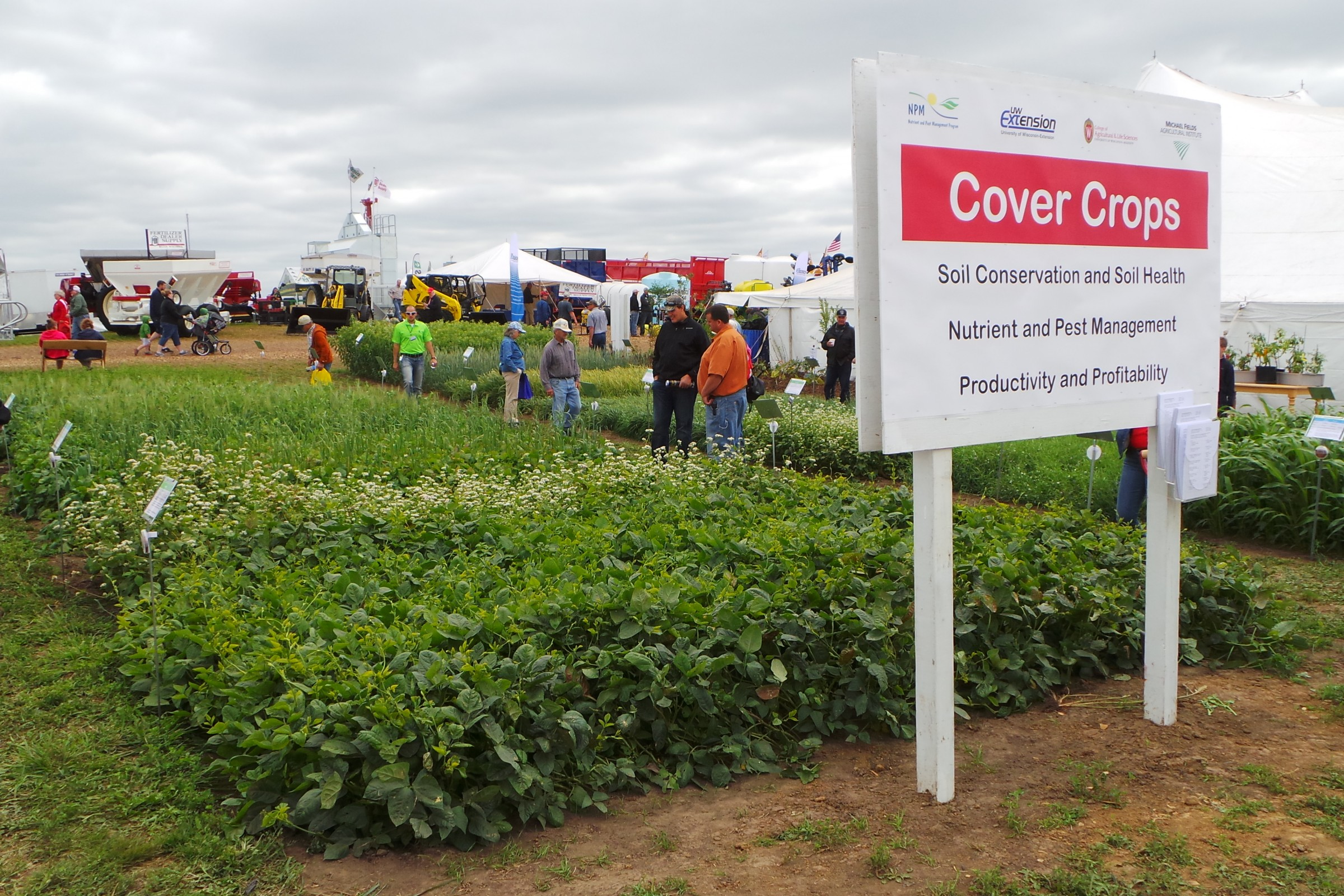 Cover crops on display