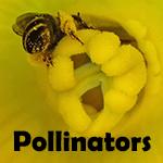 Polliniators