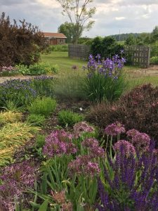 A garden with a purple palette that will be showcased on the garden walk.