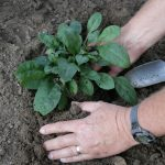 image hands planting